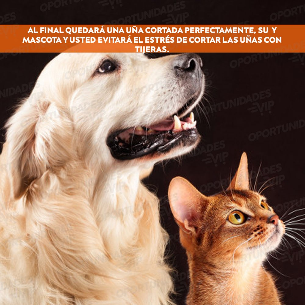 gau y perri 1