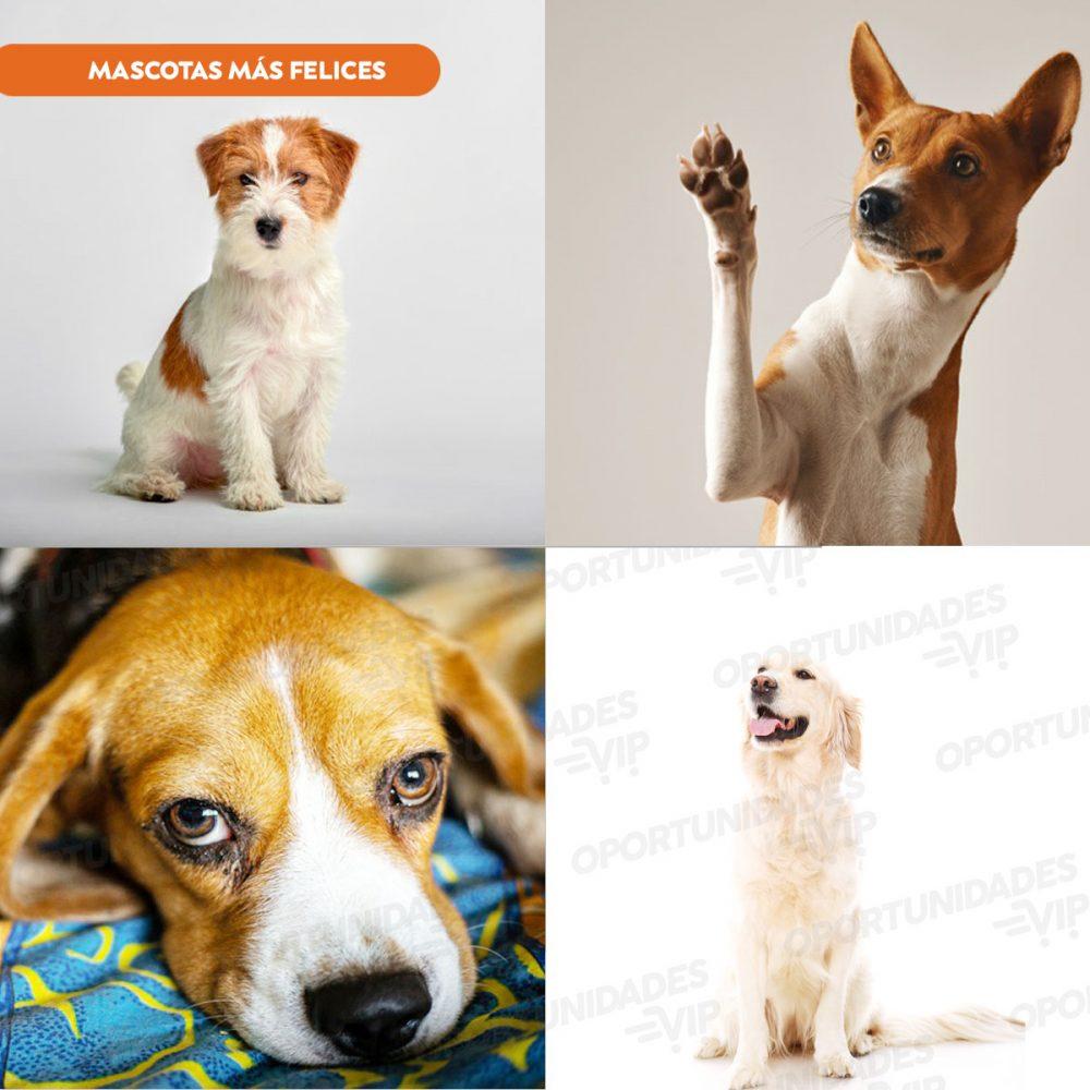 mozaico de perros Con Marca de Agua 1